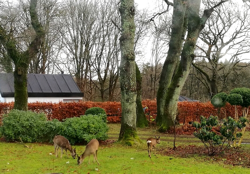 Early spring with deer in the garden.